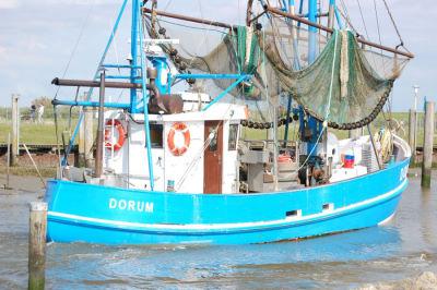 Frische Krabben an Bord