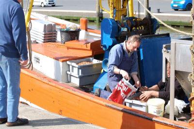 Krabbenverkauf direkt ab Kutter