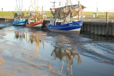 Krabbenkutter im Hafen bei Ebbe