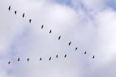 NSG Kreptitzer Heide bei Dranske