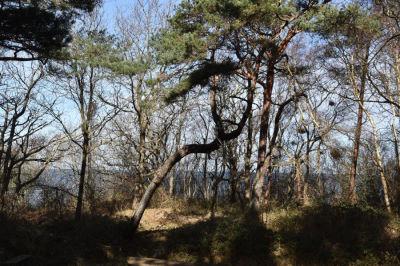 Findlinge mit Eismütze am Strand beim Feriendorf Rugana
